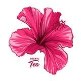 Hawaiische Hibiscus-Duft-Blume oder Malve rosa Rose Flora und Anlage vektor abbildung