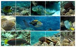 Hawaiische Marinelebensdauer Stockbild