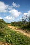 Hawaiische Spur Stockbild
