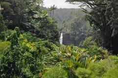 Hawaiischer Dschungel Stockfoto