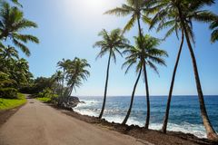 hawajczycy obrazy royalty free