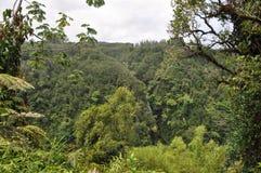 Hawajczyk Zgłębia dżunglę Obrazy Stock