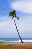 hawajczyka drzewko palmowe zdjęcie stock
