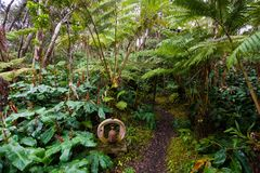 Hawaje tropikalnego lasu deszczowego domek na drzewie szczegół Obrazy Royalty Free