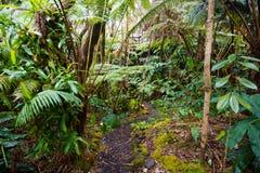 Hawaje tropikalnego lasu deszczowego domek na drzewie szczegół Zdjęcie Stock