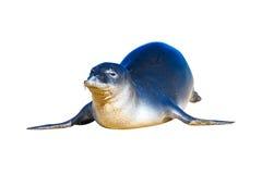Hawajska michaelita foka, odosobniona zdjęcie royalty free