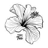 Hawajski poślubnik woni kwiat lub ślaz Wzrastaliśmy Flory i roślina royalty ilustracja