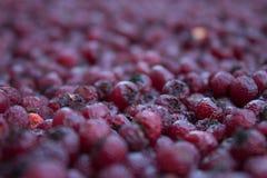 Hawberry Imagens de Stock
