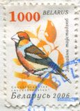 Hawfinch images stock