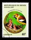 Hawfinch (coccothraustes) del Coccothraustes, serie de los pájaros, circa 199 Imagenes de archivo
