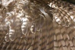 hawk красное замкнутое крыло Стоковое Изображение