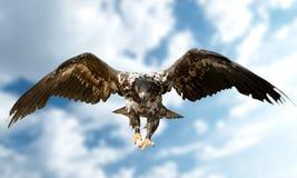 hawk fotografia stock