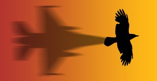 Hawk. A hawk flying with shadow - silhouette Stock Photography