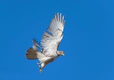 Hawk Stock Images