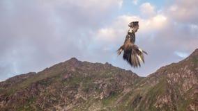 hawk fotografia stock libera da diritti