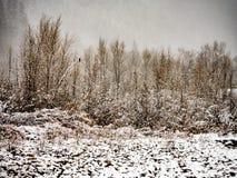 Hawk Alone in una tempesta della neve immagini stock libere da diritti