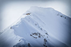 Hawk in the alps Royalty Free Stock Images