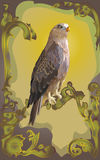 Hawk bird. Bird of prey a falcon, with a gold beak against plants from a grass Royalty Free Stock Images
