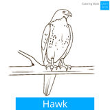 Hawk bird learn birds coloring book vector Stock Images