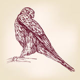 Hawk bird of prey - hand drawn vector llustration  sketch. Hawk bird of prey - hand drawn vector llustration realistic sketch Royalty Free Stock Photos