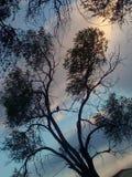 Hawk bird tree sky royalty free stock photography