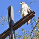 Hawk on Cross at church stock photo