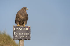 Hawk on Danger Sign Royalty Free Stock Photos
