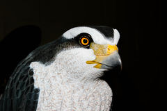 Hawk decoy closeup Stock Photography