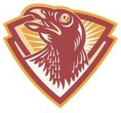 Hawk Falcon Bird Head Shield Immagini Stock