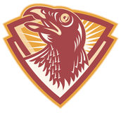Hawk Falcon Bird Head Shield Stock Images
