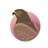 Hawk Flat Design Vector Illustration Stock Photo