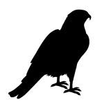 Hawk Flat Design Vector Illustration Royalty Free Stock Image
