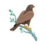 Hawk Flat Design Vector Illustration Stock Images