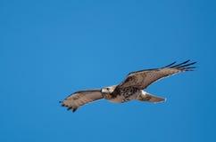 Hawk in flight Stock Photo