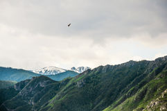 Hawk flying above the mountains Royalty Free Stock Images