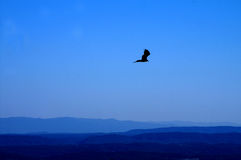 Hawk Flying High Over Mountains. A solitary hawk flies high in the dark blue sky over the mountain valley Stock Photo