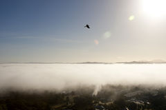 Hawk Flying Over the Clouds Royalty Free Stock Images