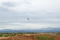 Hawk flying over desert. Natural background Royalty Free Stock Images