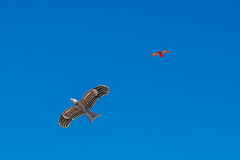 Hawk kite flying in blue sky Stock Image
