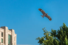 Hawk kite flying in blue sky over city Royalty Free Stock Photography