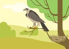 Hawk l'uccello piano dell'animale selvatico di vettore del fumetto del nido del ramo di albero dell'aquila Fotografie Stock