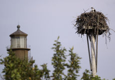 Hawk and Lighthouse Royalty Free Stock Photos
