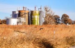 Hawk los ratones de la caza en campo marrón delante del agua-aceite knockout del agua libre que separa los tanques contra árboles imagen de archivo libre de regalías