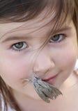 Hawk Moth Fotos de archivo libres de regalías