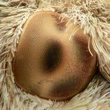 Hawk-moth eye, extreme magnification Royalty Free Stock Photos