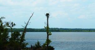 Hawk Nest Fotografering för Bildbyråer