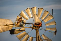 A hawk perches on an old windmill on a sunlit evening. Royalty Free Stock Photography