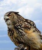 Hawk portrait against sky. In summer Stock Image
