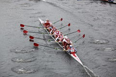 Hawk Rowing Stock Image