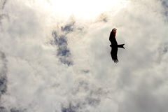 Hawk Silhouette Flying in the Clouds. The silhouette of a hawk flying in the clouds high above royalty free stock photo